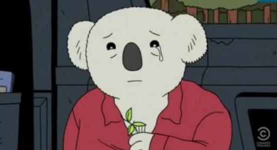 Koala qui pleure