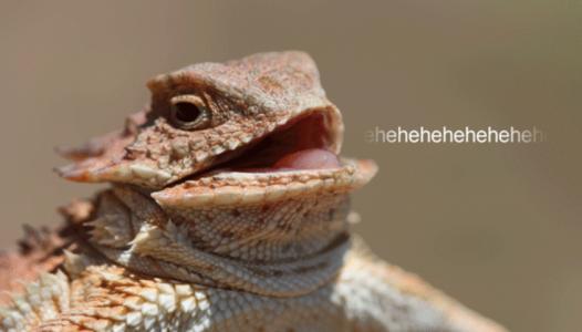 Un lézard, mascotte du Lizard Squad.