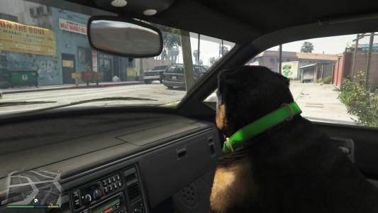 Grand Theft Auto V / Chop