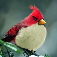 Angry Birds 2 Red