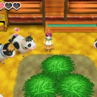 Story of Seasons personnage et vaches