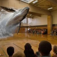 Une baleine dans un gymnase